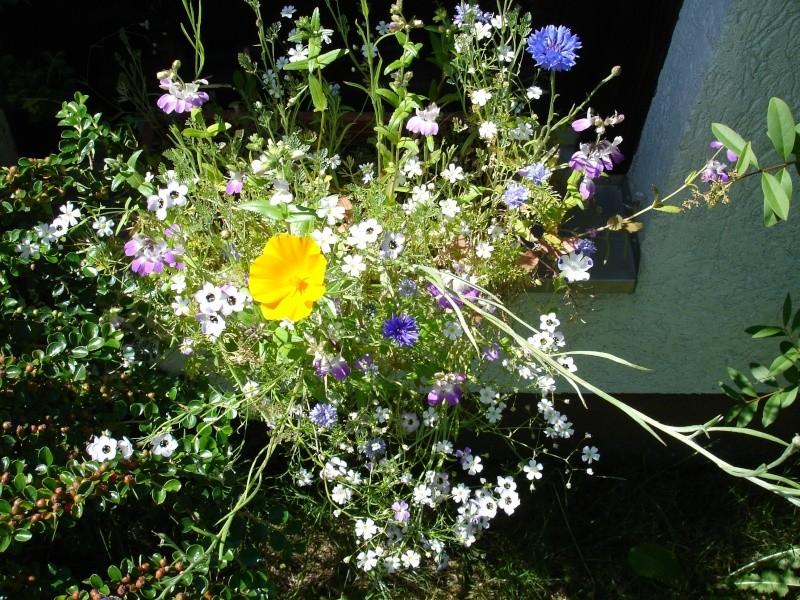 Wildblumen ( Sammelthread) - Seite 6 Dsc05110