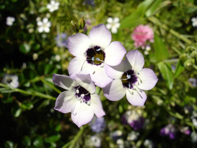 Wildblumen ( Sammelthread) - Seite 6 Dsc05111