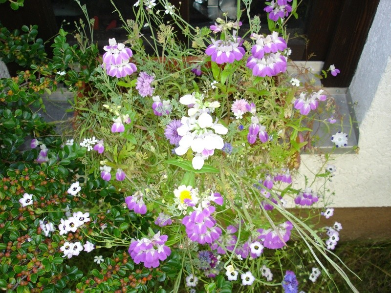 Wildblumen ( Sammelthread) - Seite 6 Dsc05112