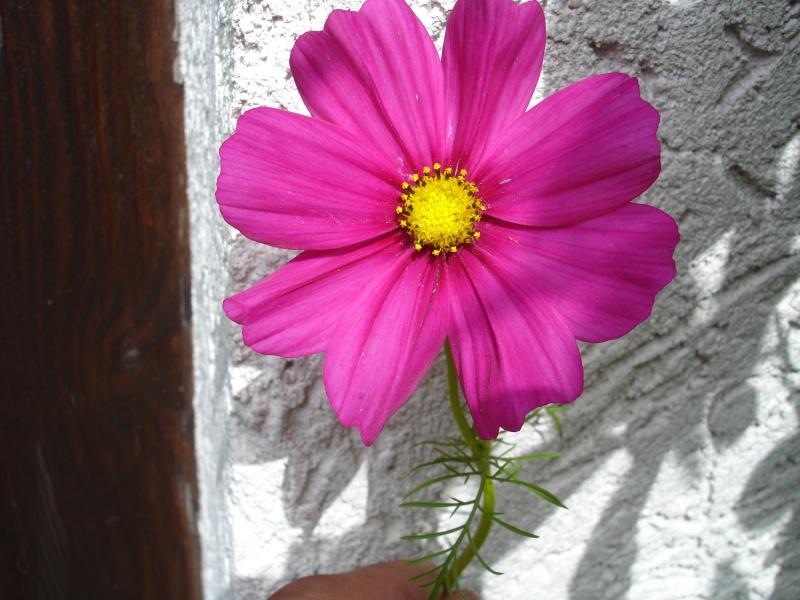 Wildblumen ( Sammelthread) - Seite 6 Dsc07410