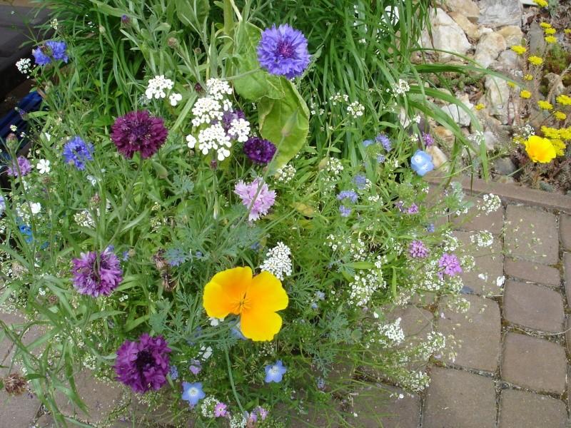 Wildblumen ( Sammelthread) - Seite 6 Dsc08411