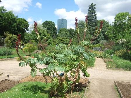 (75) Jardin des plantes - Paris Dscf1712