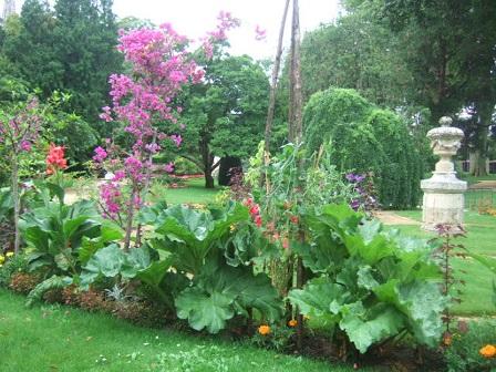 Rheum - rhubarbes ornementales  Dscf2511