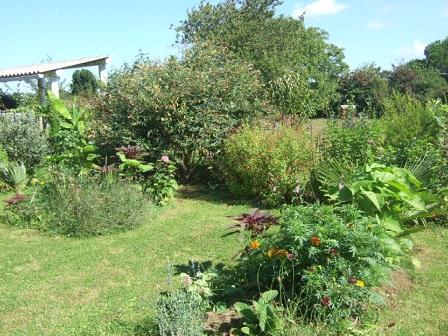 ambiances estivales au jardin - 2014 Dscf3015