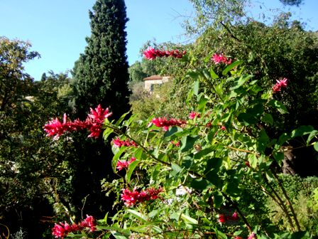 Salvia - les floraisons du moment - Page 13 Dscf4618