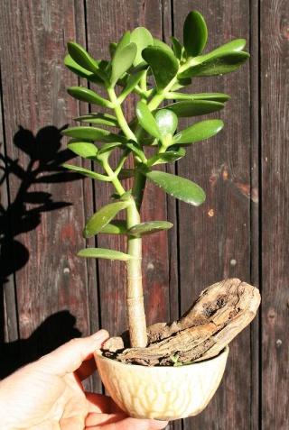 petits pots de terre pour mini succulentes 514_1410