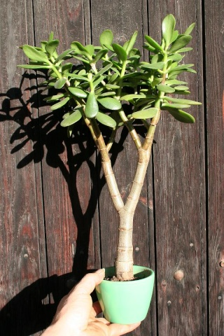 petits pots de terre pour mini succulentes 514_1411