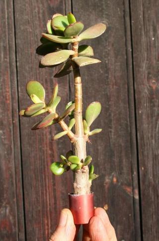 petits pots de terre pour mini succulentes 514_1414