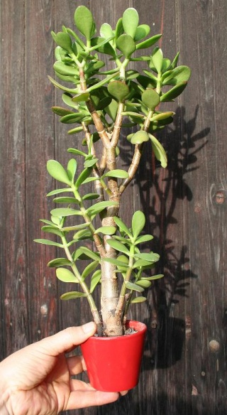 petits pots de terre pour mini succulentes 515_1510