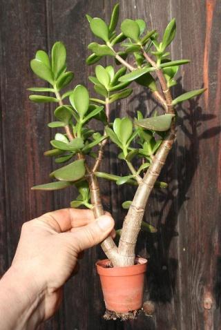 petits pots de terre pour mini succulentes 515_1511