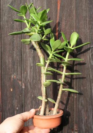 petits pots de terre pour mini succulentes 515_1513