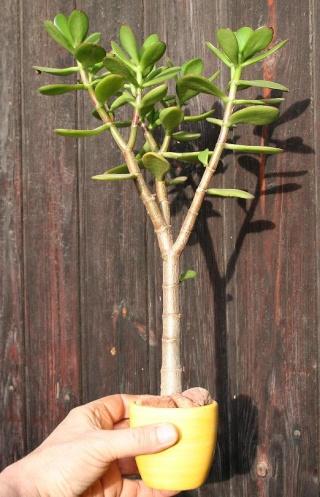 petits pots de terre pour mini succulentes 515_1514