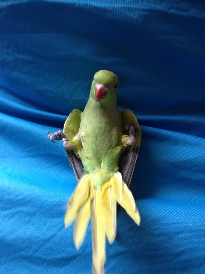 quelques oiseaux eam  Img_6111