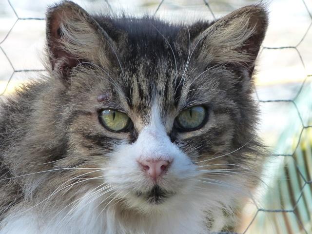 Les mamies et papis chats à l'adoption :) - Page 2 P1040910