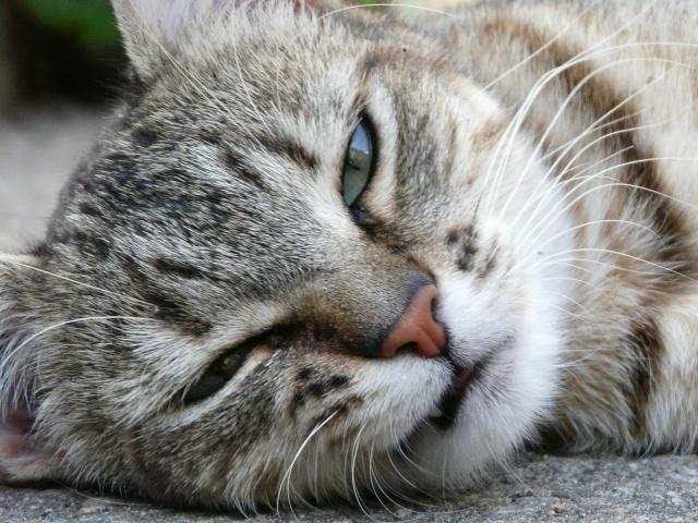 """"""" L'idéal du calme est dans un chat assis. """" Perlouu Photography of Cats ♥ Photo_10"""
