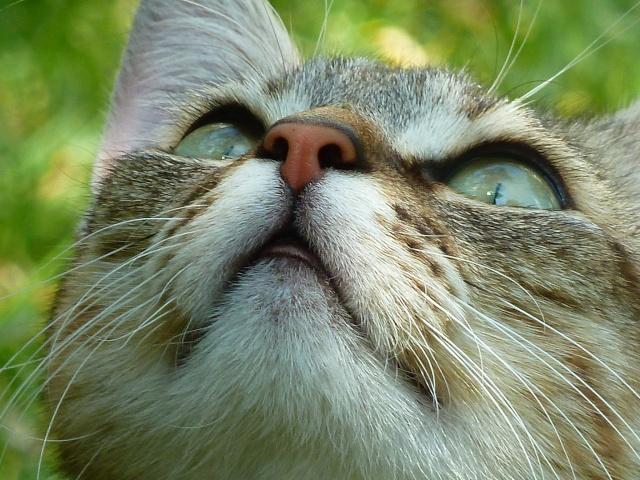 """"""" L'idéal du calme est dans un chat assis. """" Perlouu Photography of Cats ♥ Photo_11"""