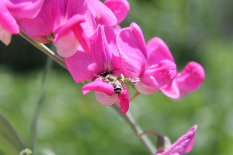 Photo fleur en macro Papill12