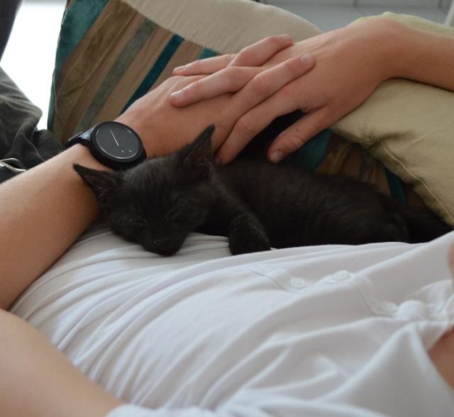 """JESPER, chaton mâle noir """"smoke"""", né le 25/04/14 Dsc_0022"""