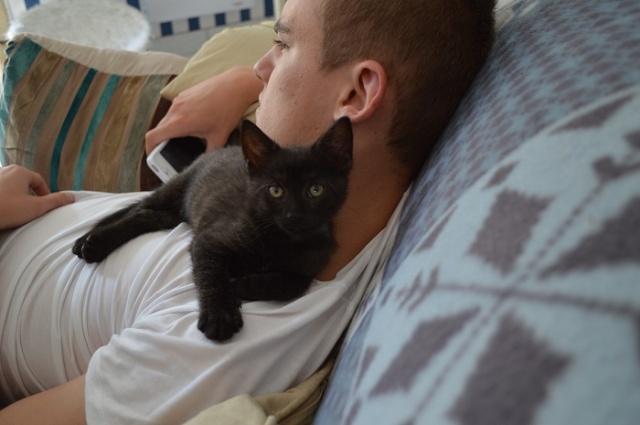 """JESPER, chaton mâle noir """"smoke"""", né le 25/04/14 Dsc_0024"""