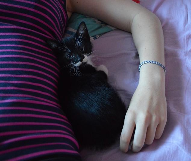 JEFFERSON, chaton mâle noir et blanc, né le 20/08/14 Dsc_0163