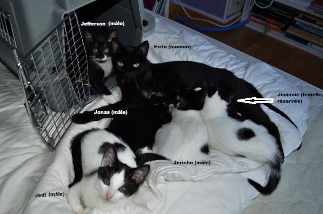 JERICHO, chaton mâle blanc à taches noires, né le 20/08/14 Dsc_0179