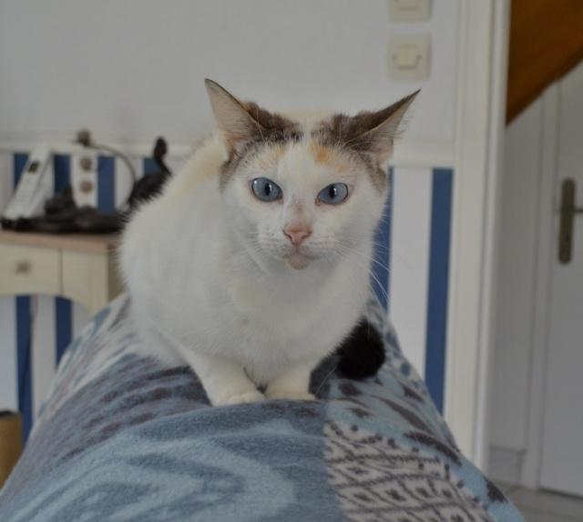 Hannabelle femelle blanche et beige née le 01/09/2012 Hannab12