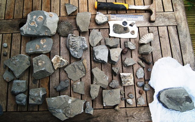 Lyme Regis finds including Pholidophorus (fish) Group10