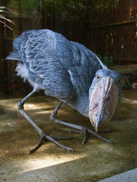 L'oiseau mystére - Page 16 Oiseau11