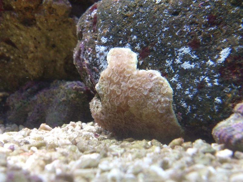 question sur se coraux Dsc_0010