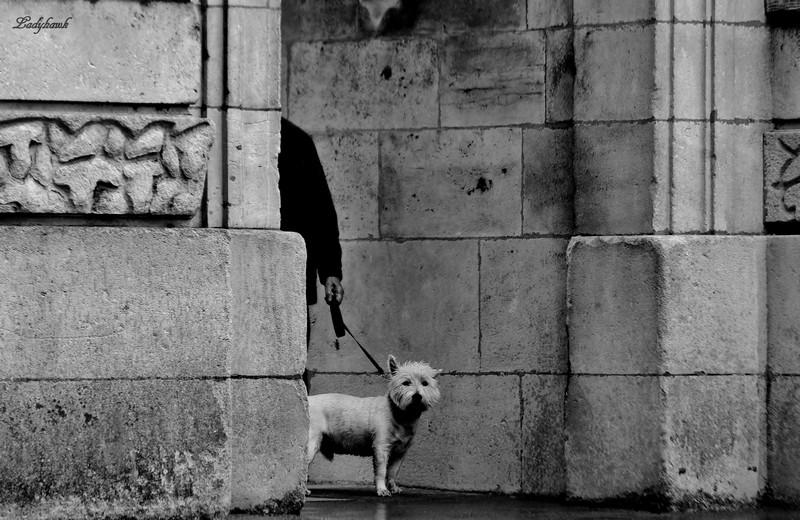 le chien ( dans la rue ) Img_2114