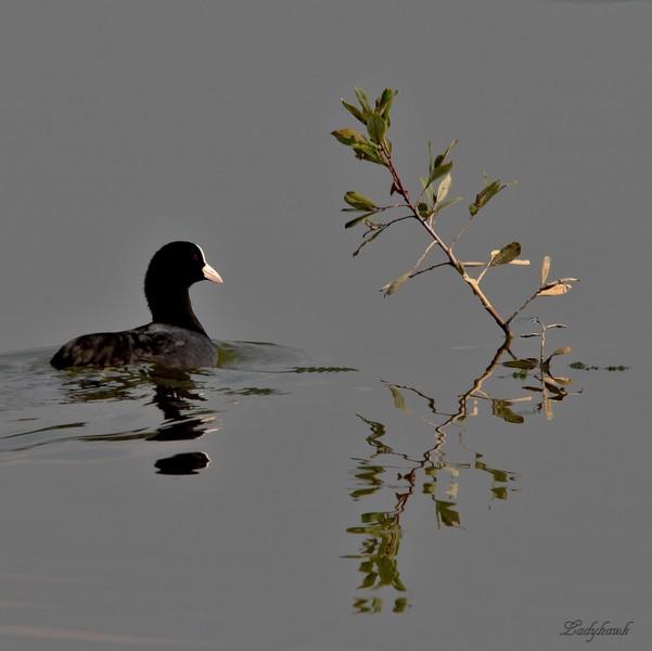 reflets Img_2810