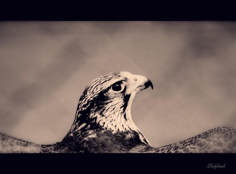 l'oiseau Img_6213
