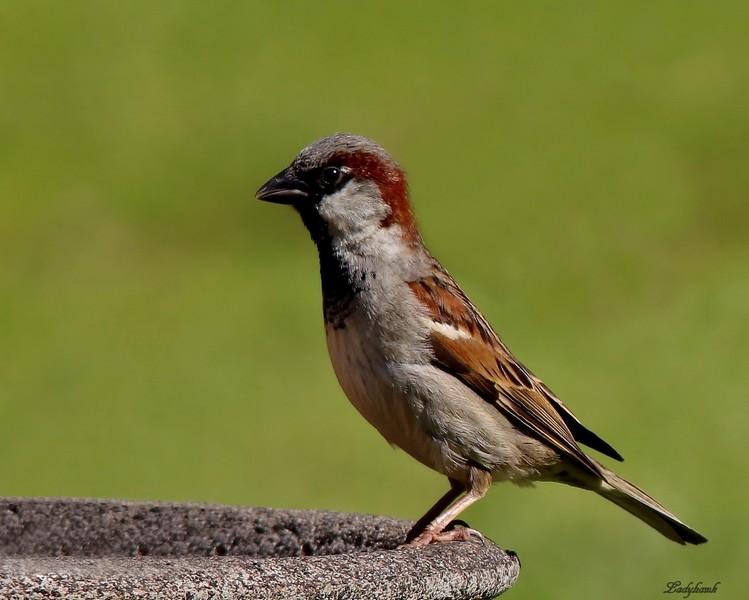 l'oiseau Img_8110