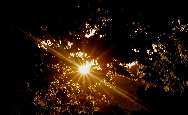 sunlight P7015012