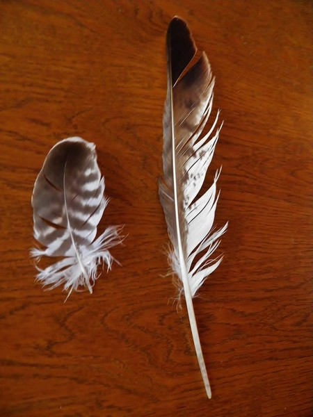 plumes P8170010