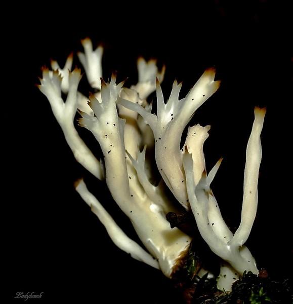 lichen P8225610