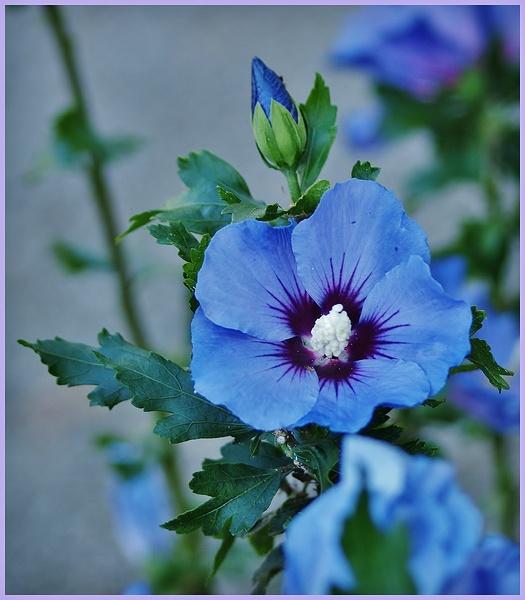 bleue P9074713