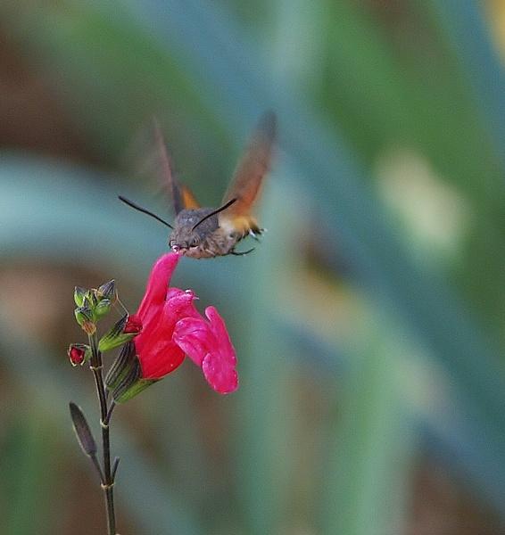 petite fleur et .... P9125312