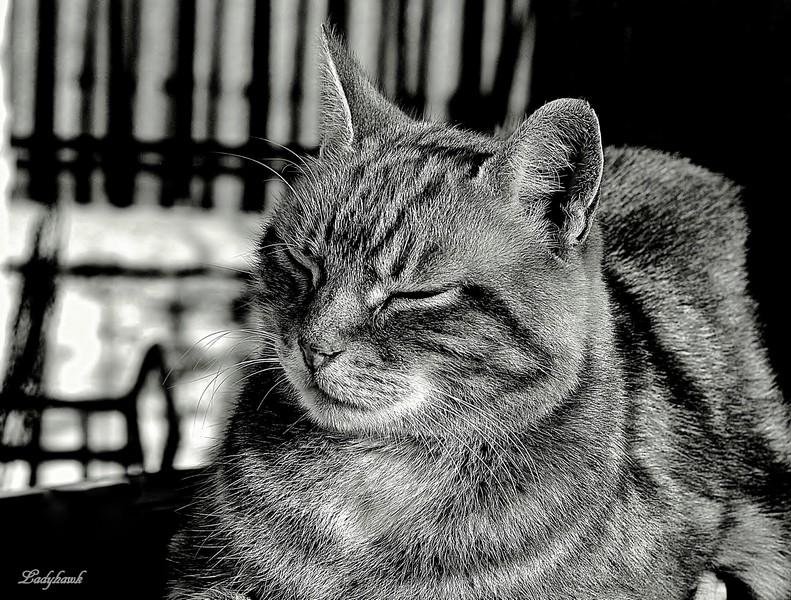 le chat  P9166713