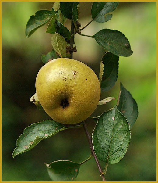 fruit d'automne P9246110