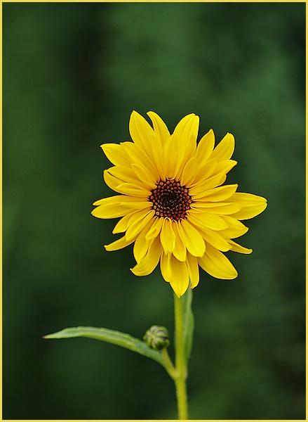 petit soleil P9296210