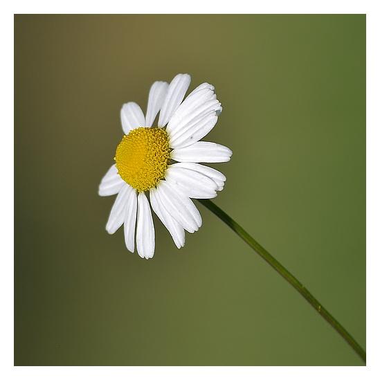 fleur... P9306418