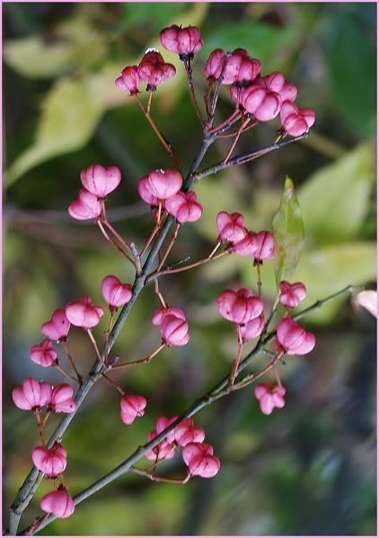 petites fleurs roses Pa026614