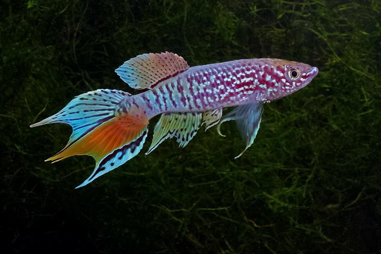 Petites nouvelles de ma fish room... Fundul15