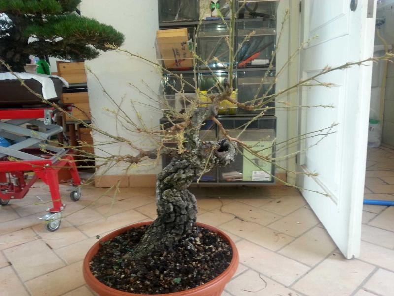 Quercus cerris - Pagina 5 20140512