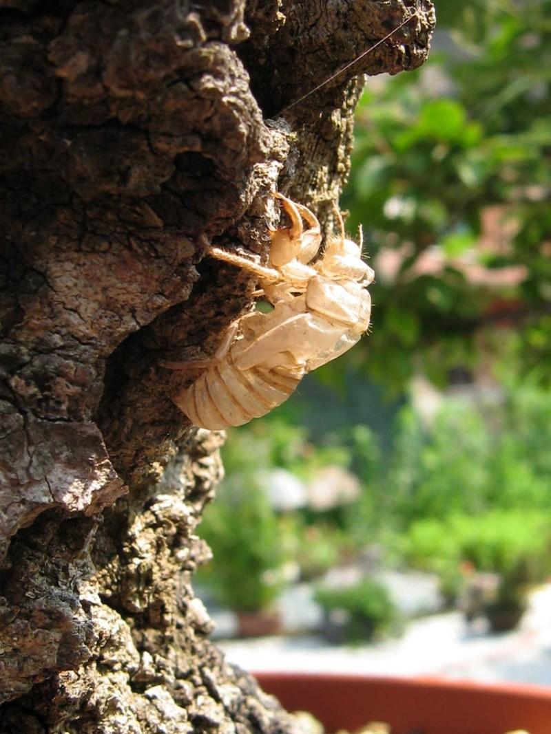 Quercus cerris - Pagina 3 Img_0213