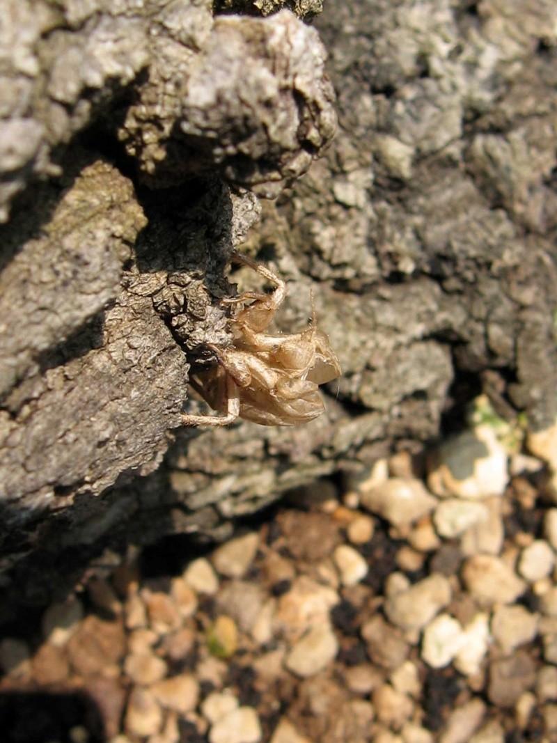 Quercus cerris - Pagina 3 Img_0215