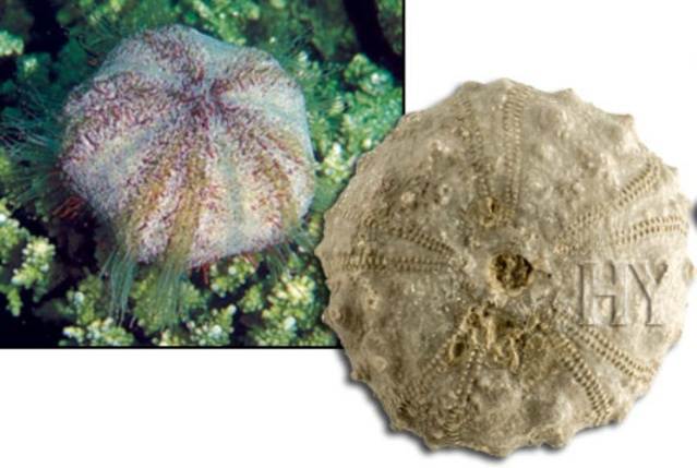 Living fossils Fossil11