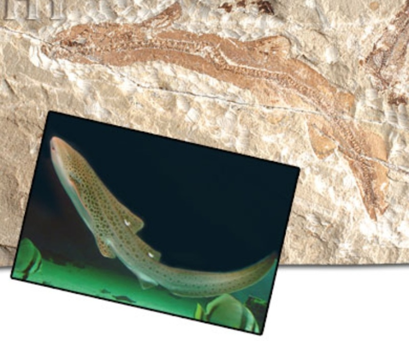 Living fossils Fossil12