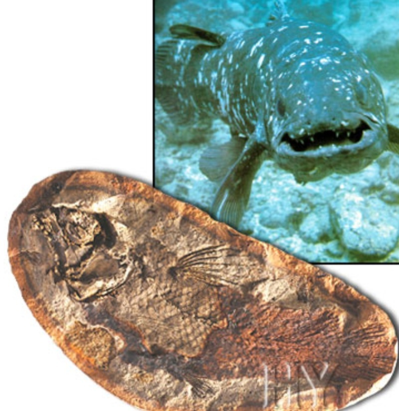 Living fossils Fossil13